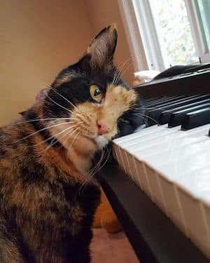 Chat qui aime un piano numérique
